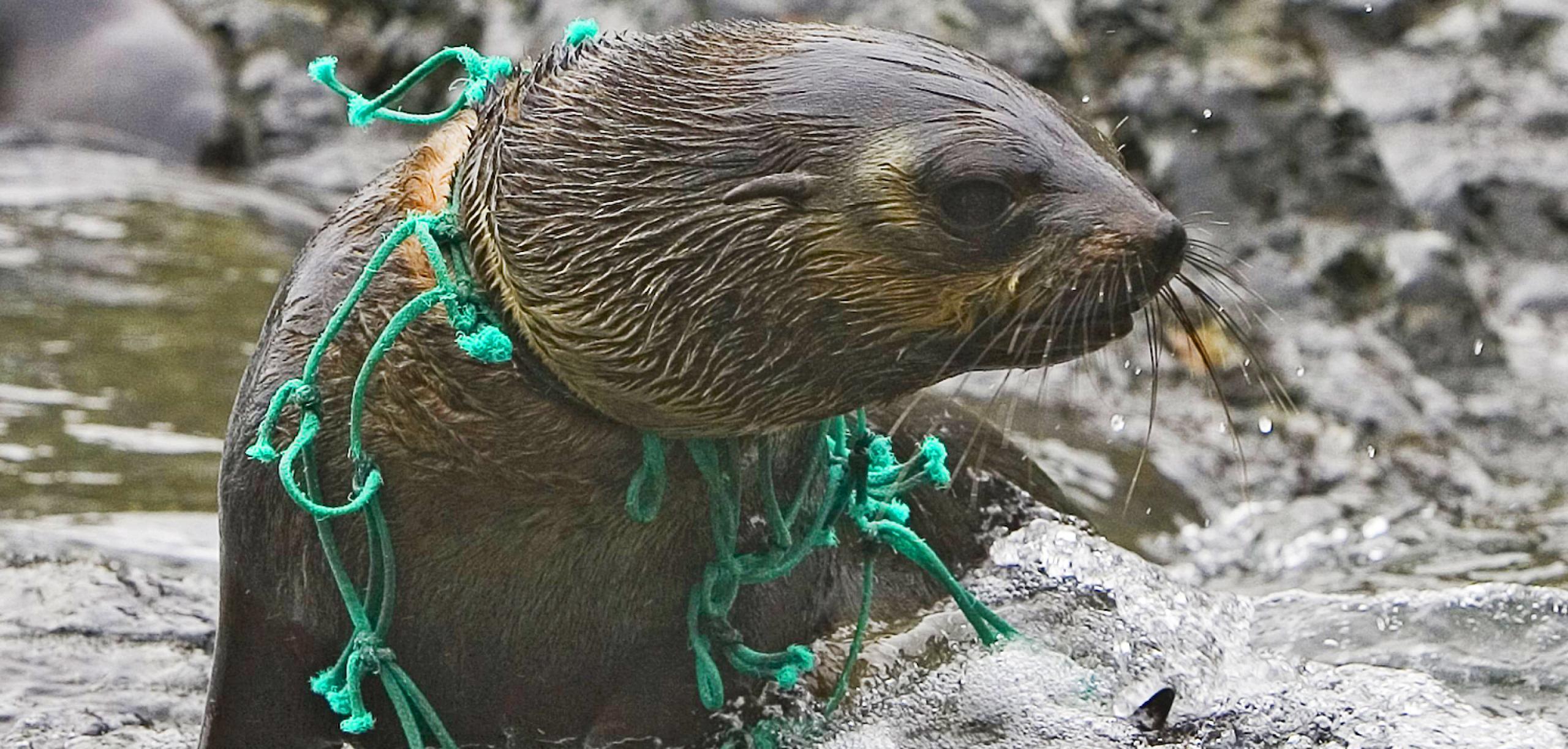 Plastikmüll sammelt sich in der arktischen Tiefsee